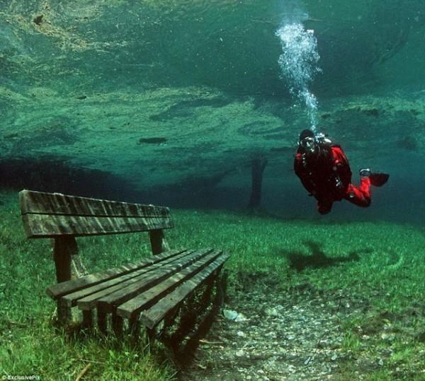عکس های دیدنی از جنگل زیر آب در اتریش