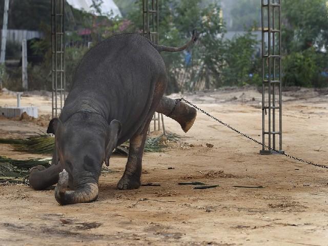عکس| فیلی که شکست خورد