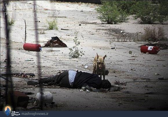 حرکت وحشیانه النصره با سربازان سوری+عکس