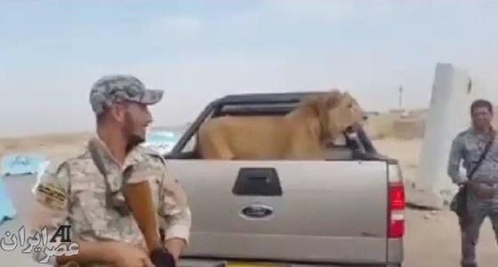 شکار شیر ارتش عراق در نبرد با داعش +عکس