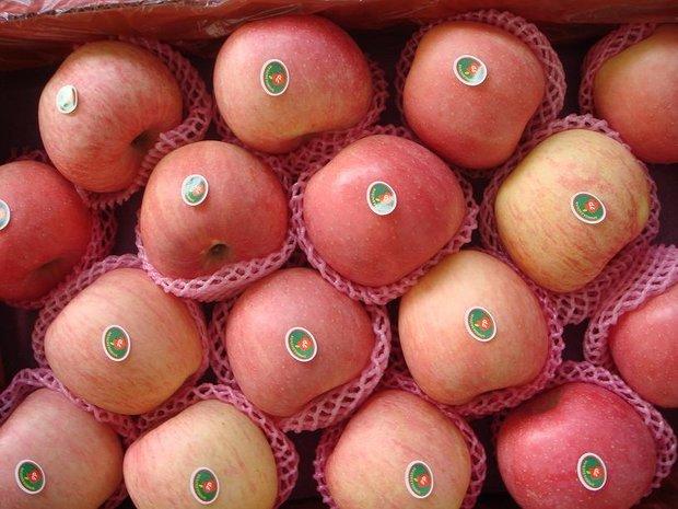 ایران به چه کشورهایی سیب صادر می کند؟