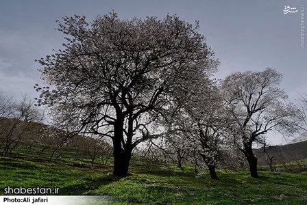 طبیعت زیبای روستای کلم +تصاویر